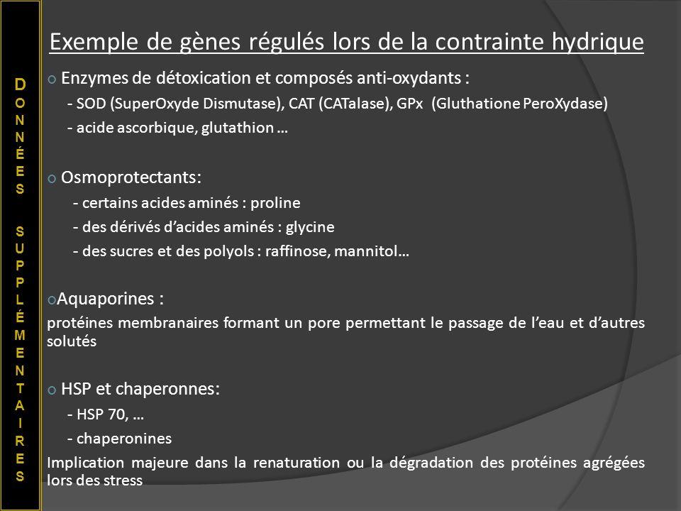 Exemple de gènes régulés lors de la contrainte hydrique Enzymes de détoxication et composés anti-oxydants : - SOD (SuperOxyde Dismutase), CAT (CATalas