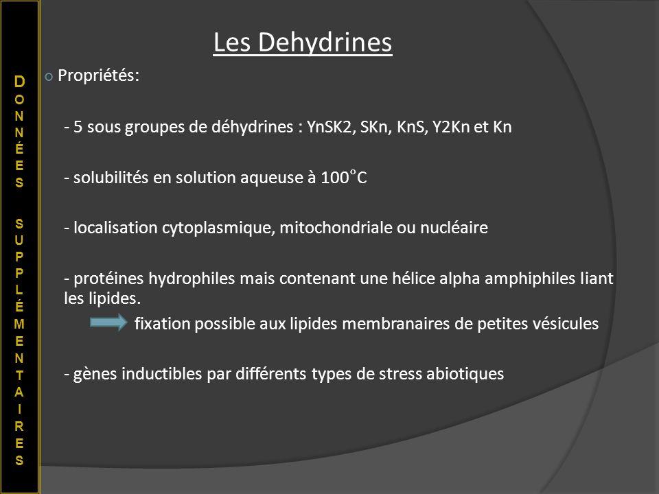 Propriétés: - 5 sous groupes de déhydrines : YnSK2, SKn, KnS, Y2Kn et Kn - solubilités en solution aqueuse à 100°C - localisation cytoplasmique, mitoc