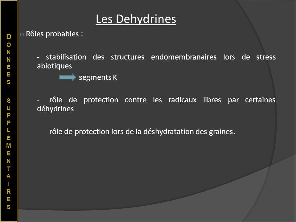 Rôles probables : - stabilisation des structures endomembranaires lors de stress abiotiques segments K -rôle de protection contre les radicaux libres