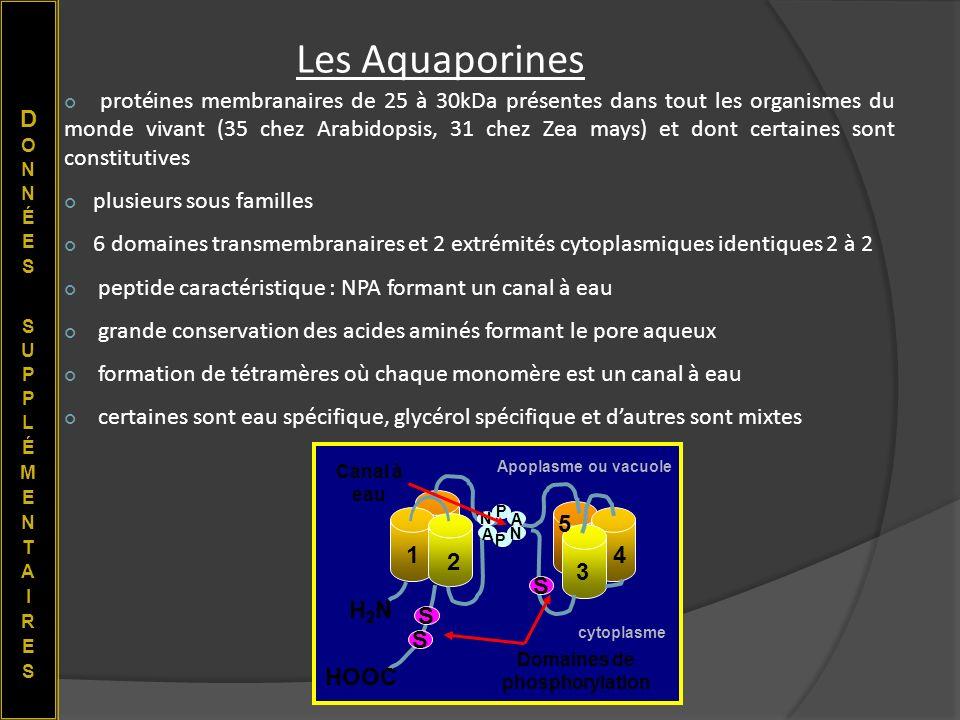 Les Aquaporines protéines membranaires de 25 à 30kDa présentes dans tout les organismes du monde vivant (35 chez Arabidopsis, 31 chez Zea mays) et don