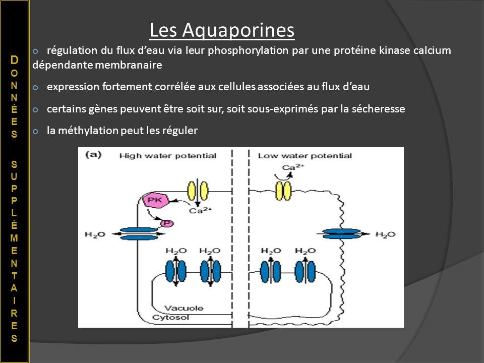 Les Aquaporines régulation du flux deau via leur phosphorylation par une protéine kinase calcium dépendante membranaire expression fortement corrélée