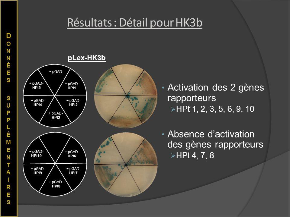 Activation des 2 gènes rapporteurs HPt 1, 2, 3, 5, 6, 9, 10 Absence dactivation des gènes rapporteurs HPt 4, 7, 8 + pGAD- HPt2 + pGAD- HPt1 + pGAD- HP