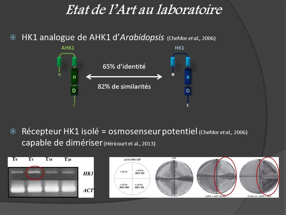 Etat de lArt au laboratoire HK1 analogue de AHK1 dArabidopsis (Chefdor et al., 2006) Récepteur HK1 isolé = osmosenseur potentiel (Chefdor et al., 2006