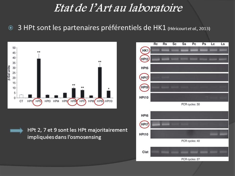 Etat de lArt au laboratoire 3 HPt sont les partenaires préférentiels de HK1 (Héricourt et al., 2013) HPt 2, 7 et 9 sont les HPt majoritairement impliq
