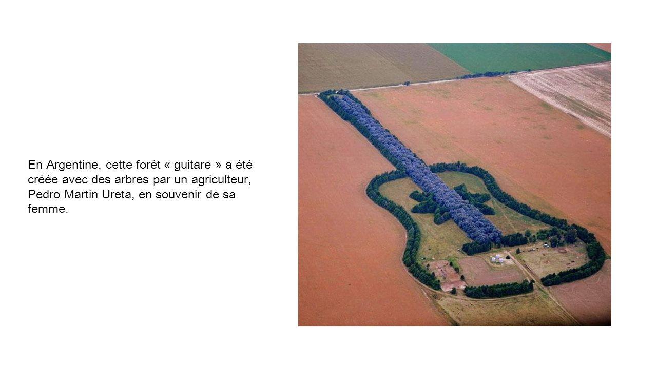 En Argentine, cette forêt « guitare » a été créée avec des arbres par un agriculteur, Pedro Martin Ureta, en souvenir de sa femme.