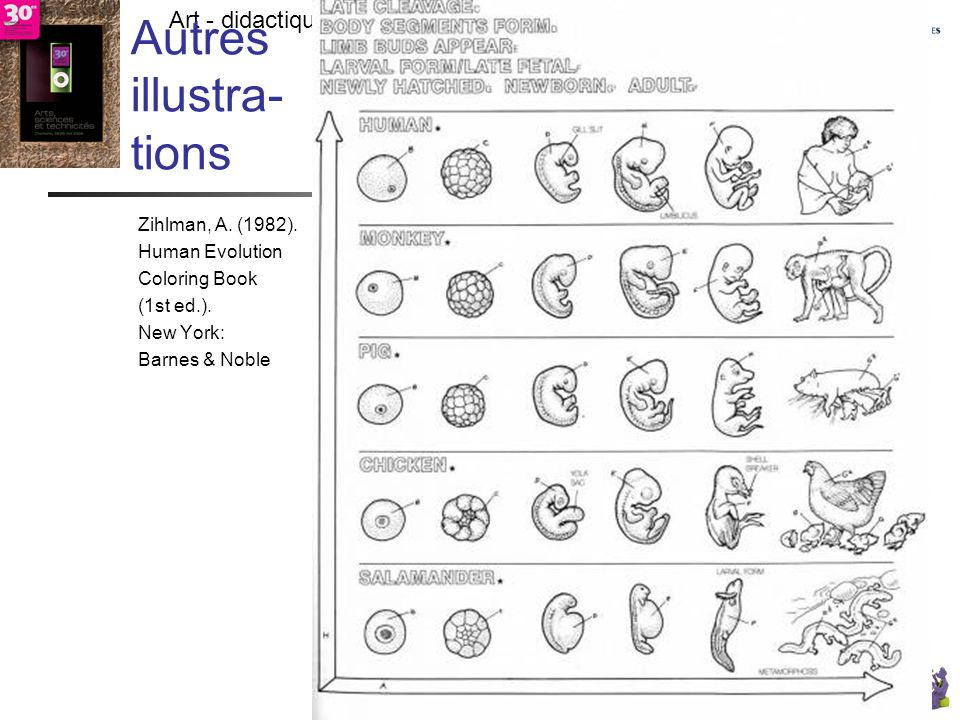 - TECFA UniGe Art - didactique - résultats- vérité -> citoyens responsables ? Chamonix - LDES UniGe Lombard F. 27 V 09 Autres illustra- tions Zihlman,