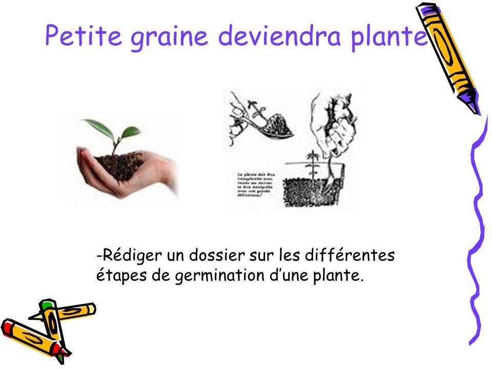 Petite graine deviendra plante -Rédiger un dossier sur les différentes étapes de germination dune plante.