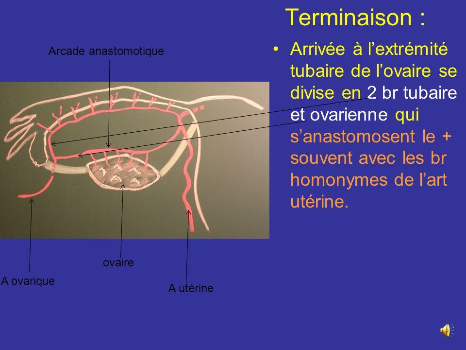 Des 2 côtés passent en Av de luretère au niveau de L3-L4 descend dans le ligt suspenseur de lovaire accompagnée de ses V satellites, des conduits lympha, du plexus nerveux ovarique Au niveau du détroit sup croise les vx iliaques à 2 cm en Av de luretère et pénètre le ligt large