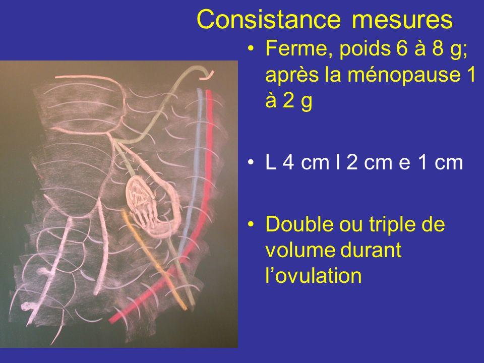 Consistance mesures Ferme, poids 6 à 8 g; après la ménopause 1 à 2 g L 4 cm l 2 cm e 1 cm Double ou triple de volume durant lovulation