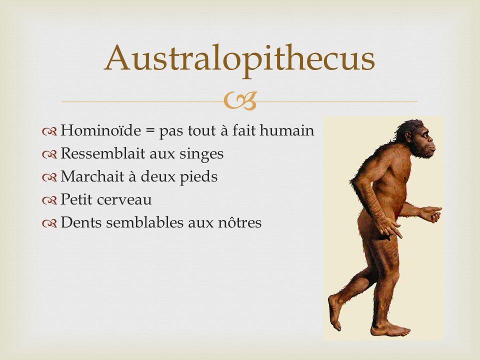 Hominoïde = pas tout à fait humain Ressemblait aux singes Marchait à deux pieds Petit cerveau Dents semblables aux nôtres Australopithecus