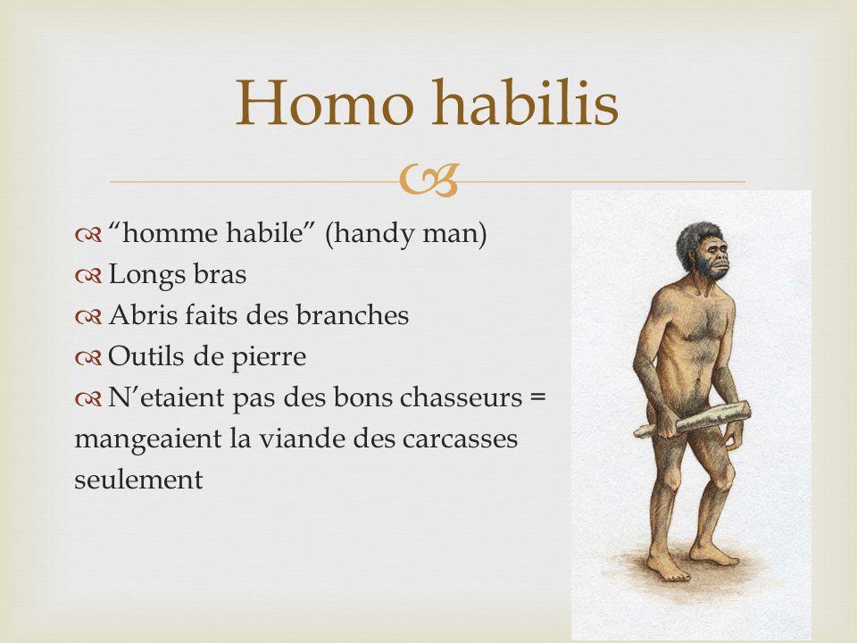 homme habile (handy man) Longs bras Abris faits des branches Outils de pierre Netaient pas des bons chasseurs = mangeaient la viande des carcasses seu