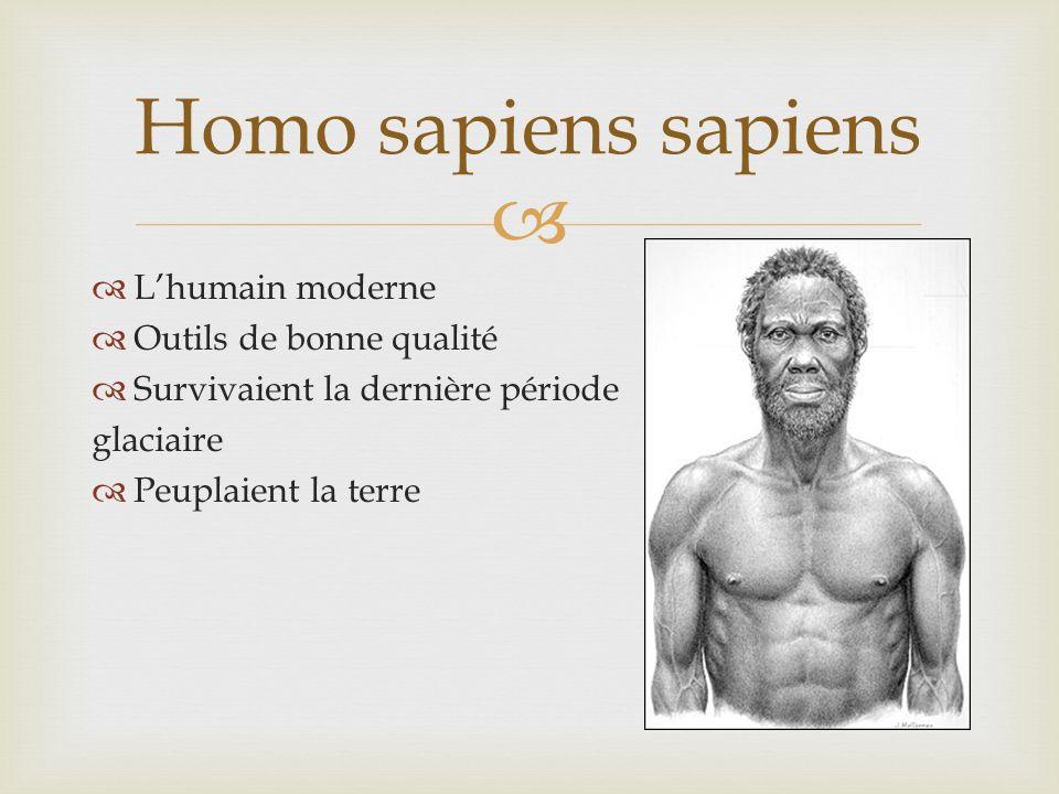 Lhumain moderne Outils de bonne qualité Survivaient la dernière période glaciaire Peuplaient la terre Homo sapiens sapiens