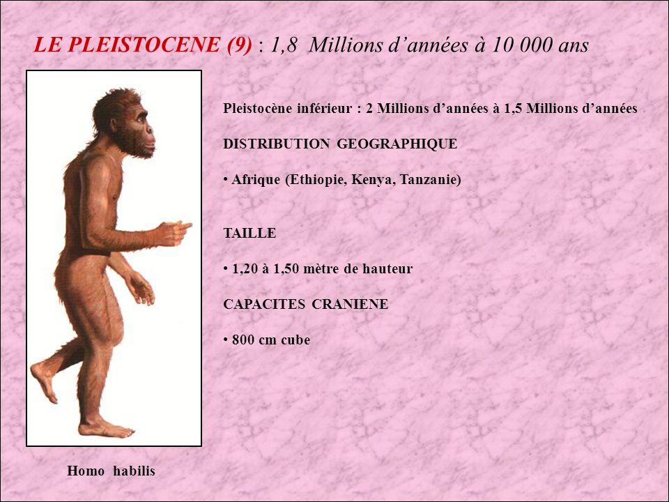LE PLEISTOCENE (8) : 1,8 Millions dannées à 10 000 ans