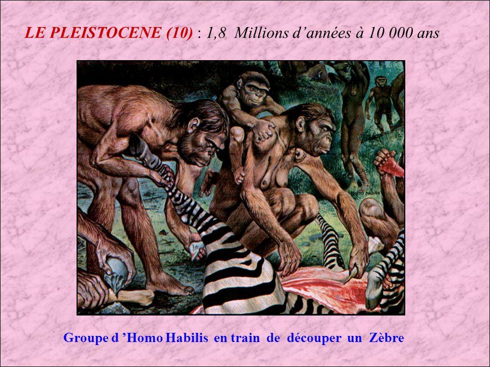 LE PLEISTOCENE (9) : 1,8 Millions dannées à 10 000 ans Homo habilis Pleistocène inférieur : 2 Millions dannées à 1,5 Millions dannées DISTRIBUTION GEOGRAPHIQUE Afrique (Ethiopie, Kenya, Tanzanie) TAILLE 1,20 à 1,50 mètre de hauteur CAPACITES CRANIENE 800 cm cube