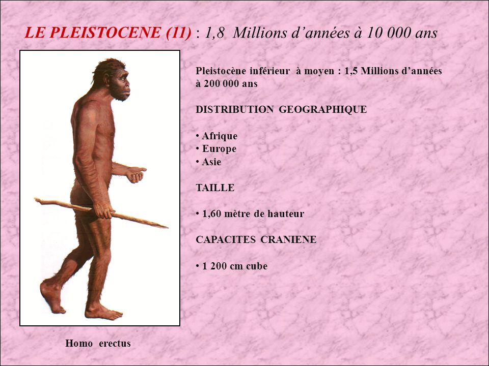 LE PLEISTOCENE (10) : 1,8 Millions dannées à 10 000 ans Groupe d Homo Habilis en train de découper un Zèbre