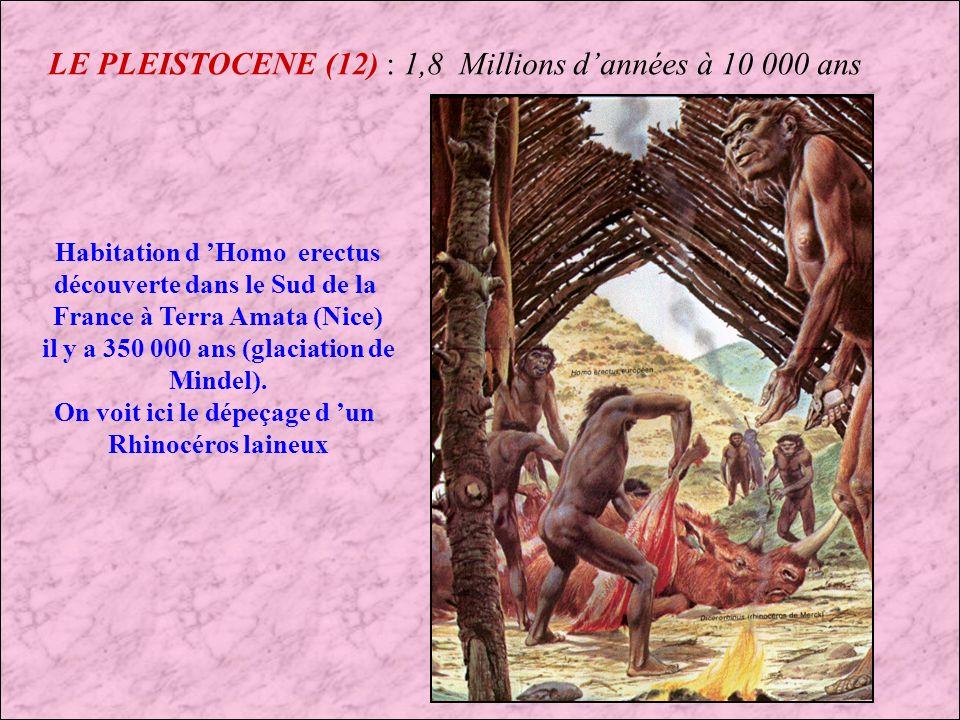 LE PLEISTOCENE (11) : 1,8 Millions dannées à 10 000 ans Homo erectus Pleistocène inférieur à moyen : 1,5 Millions dannées à 200 000 ans DISTRIBUTION GEOGRAPHIQUE Afrique Europe Asie TAILLE 1,60 mètre de hauteur CAPACITES CRANIENE 1 200 cm cube