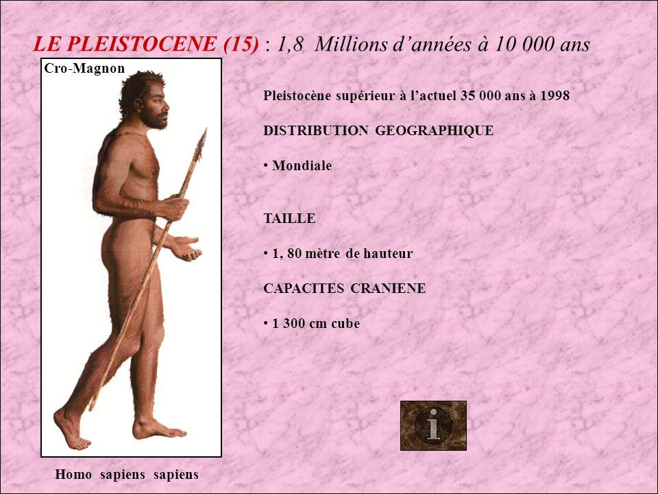 LE PLEISTOCENE (14) : 1,8 Millions dannées à 10 000 ans L homme de Néanderthal que l on a si souvent décrit comme un arriéré à cependant inventé la culte aux morts, tradition qui perdure encore .