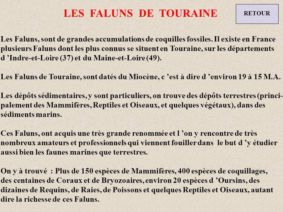 LE BASSIN PARISIEN RETOUR Le Bassin Parisien est comme son nom lindique un bassin sédimentaire, très riche en fossiles, surtout en Coquillages, Coraux, dents de Requins, Raies et Poissons.