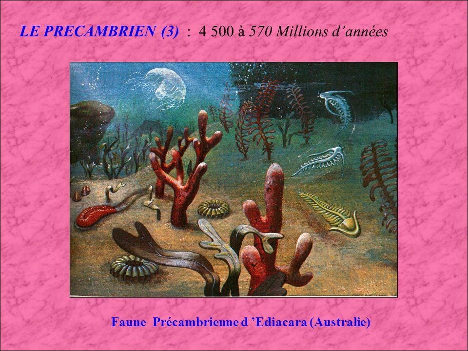 LE PRECAMBRIEN (2) : 4 500 à 570 Millions dannées Paysage terrestre du Précambrien