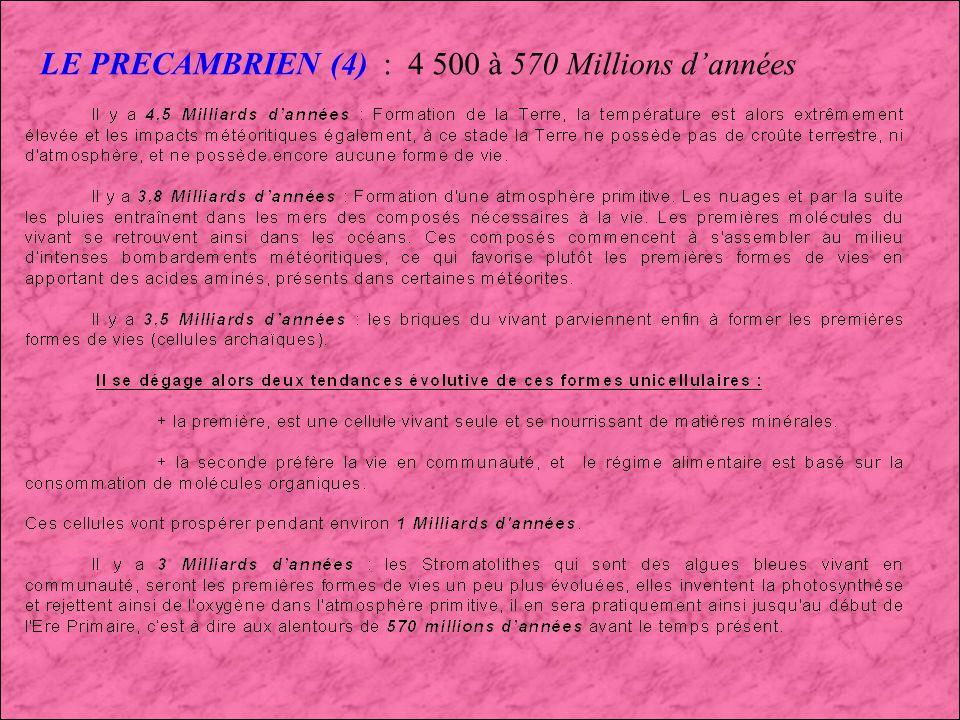 LE PRECAMBRIEN (3) : 4 500 à 570 Millions dannées Faune Précambrienne d Ediacara (Australie)