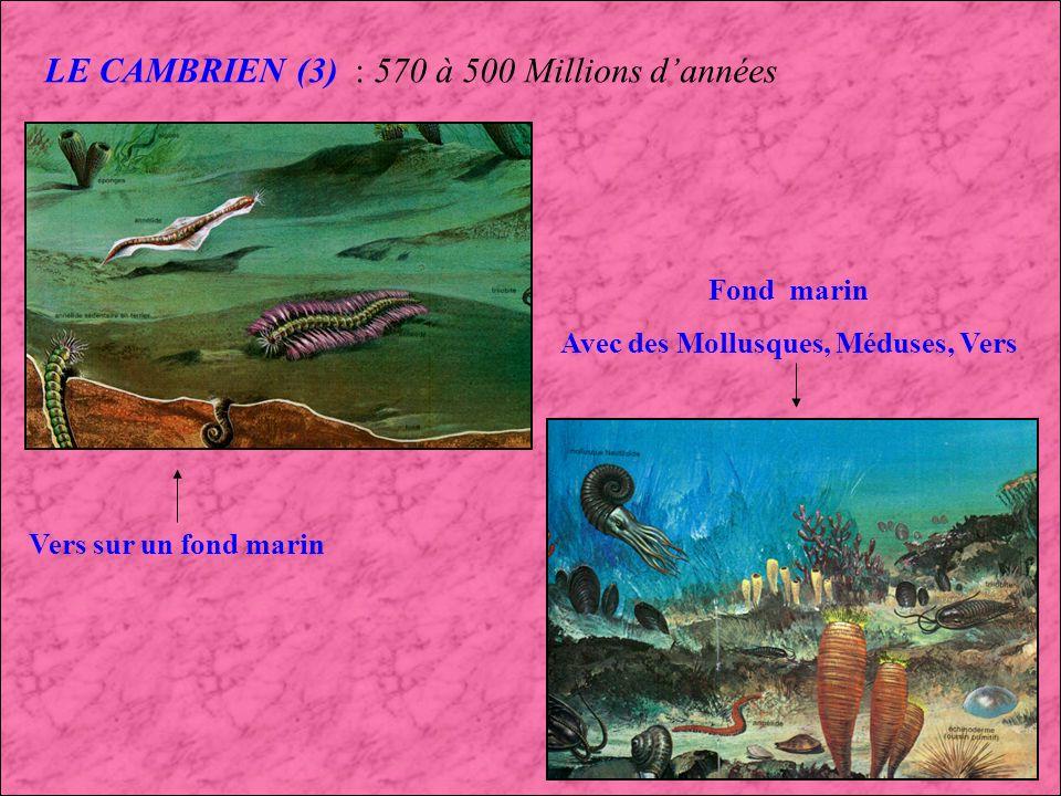 LE CAMBRIEN (2) : 570 à 500 Millions dannées La Faune des schistes du Burgess (Canada) : Un des premiers écosystèmes Marella trilobite Hallucigena Vers Pikaia Opabina Anamalocaris Sidney Canadia Haplo