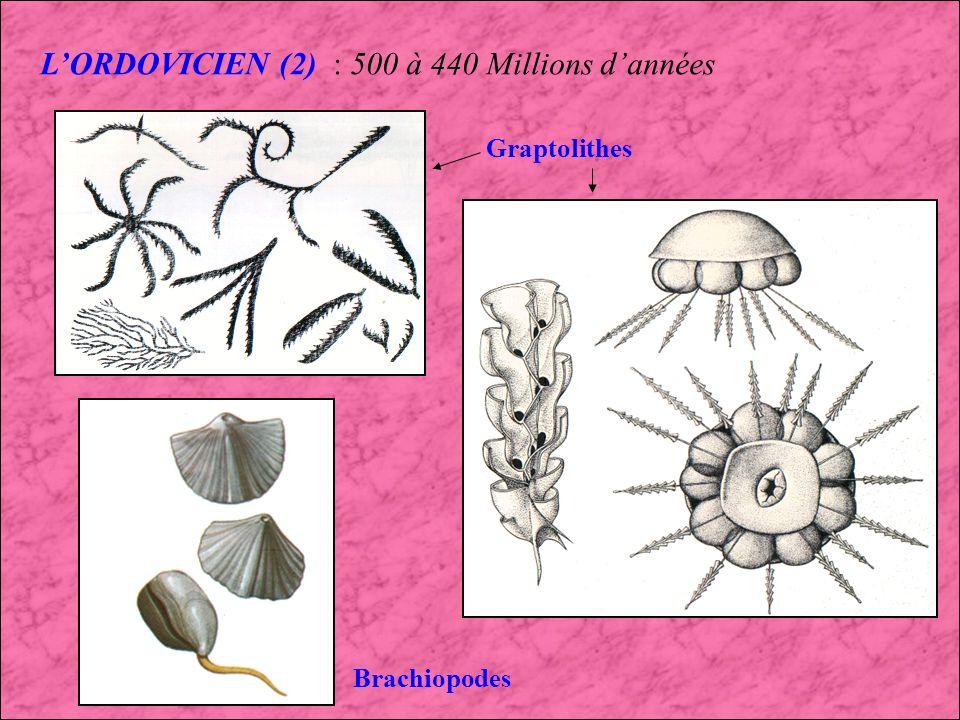 LORDOVICIEN : 500 à 440 Millions dannées De nouvelles formes de vies apparaissent et celles présentes au Cambrien comme les Trilobites continuent leur développement dans les mers.
