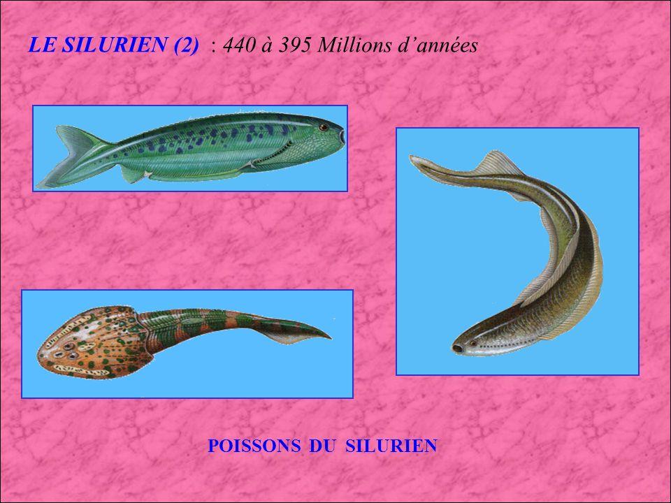 LE SILURIEN : 440 à 395 Millions dannées Apparition des : 1er Coraux 1er Poissons cuirassés 1ere Plantes terrestres Plantes terrestres Dalmanites (Trilobite)