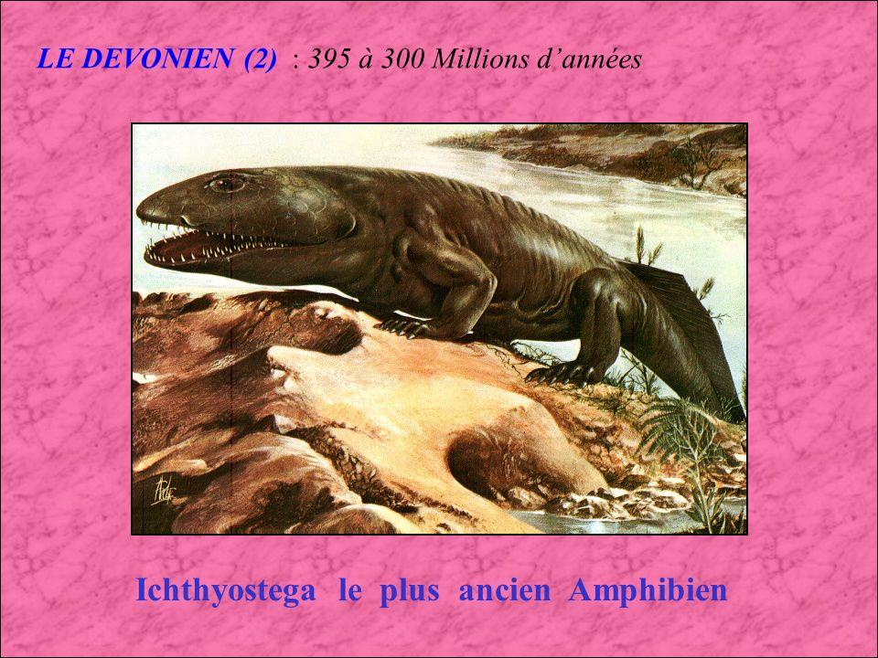 LE DEVONIEN : 395 à 300 Millions dannées Dunkleosteus Dunkleosteus était un des premiers Poisson Géant un géant dans les mers du Dévonien : 9 mètres de long Phacops (Trilobite) Greenops (Trilobite)