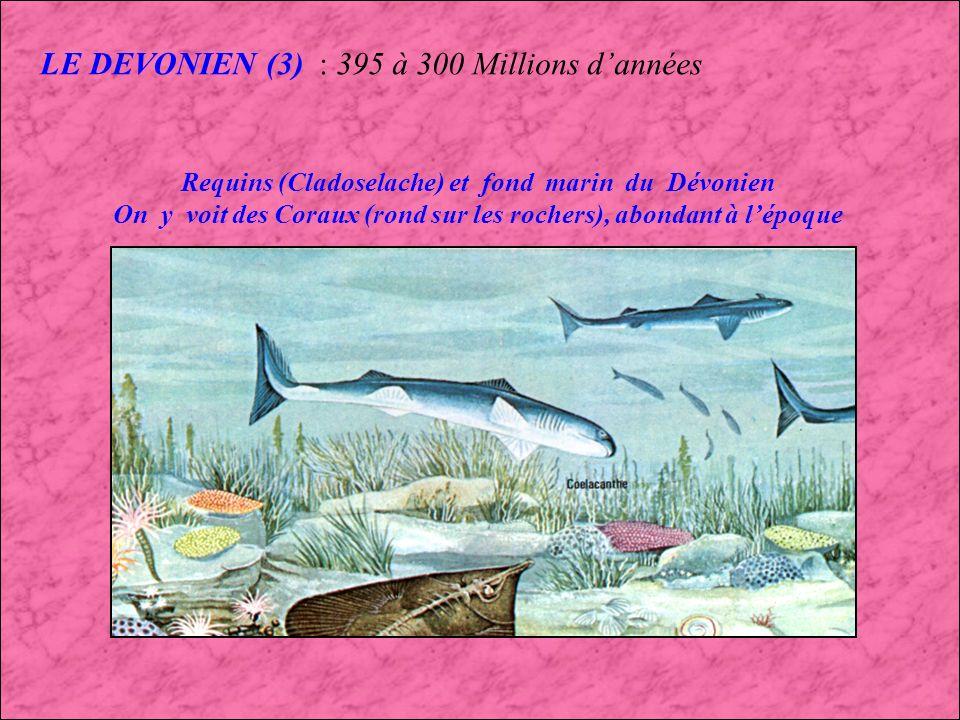 LE DEVONIEN (2) : 395 à 300 Millions dannées Ichthyostega le plus ancien Amphibien