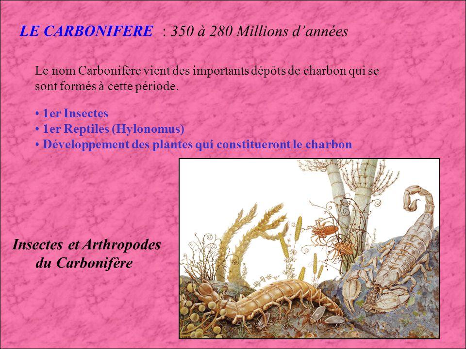 LE DEVONIEN (4) : 395 à 300 Millions dannées