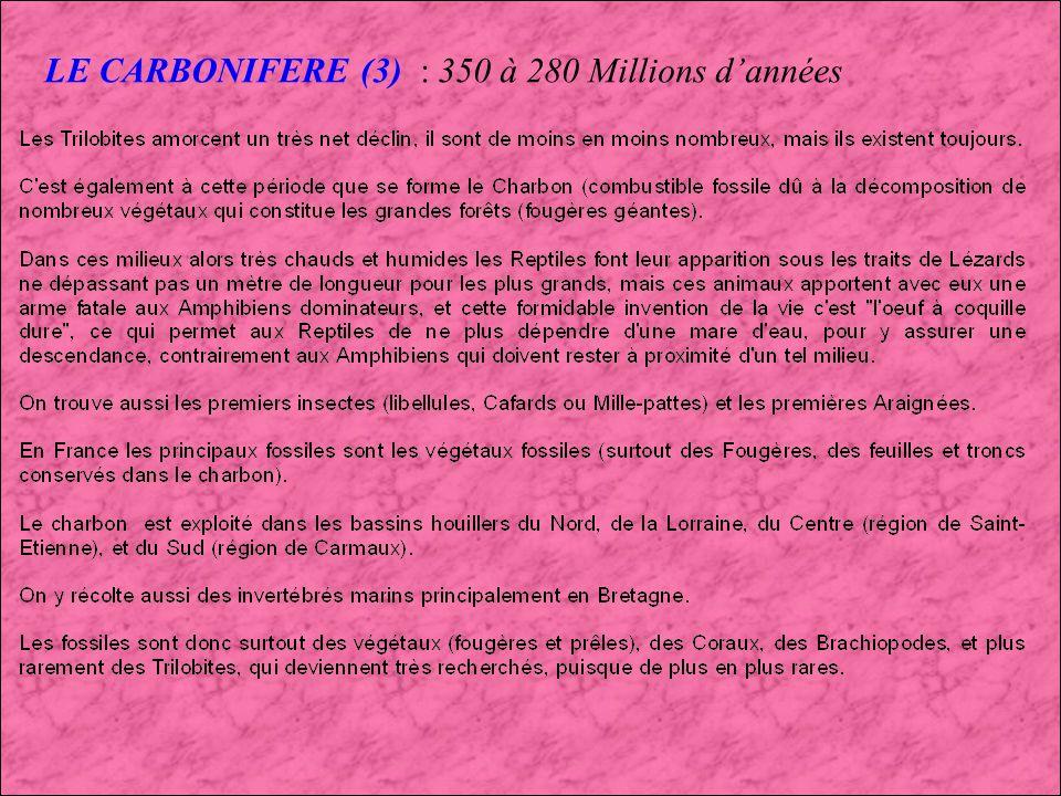 LE CARBONIFERE (2) : 350 à 280 Millions dannées Diplocaulus (Amphibien à tête triangulaire) Hylonomus (1er Reptile) Reptiles et Amphibiens