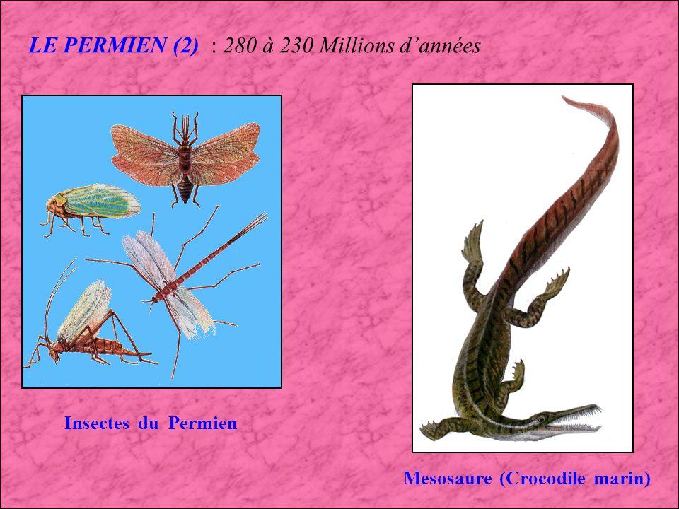 LE PERMIEN : 280 à 230 Millions dannées Le Reptile Dimetrodon (Texas)lAmphibien Eryops (USA) Disparition des Trilobites, développement des Reptiles terrestres, diminution du nombre despèces dAmphibiens.