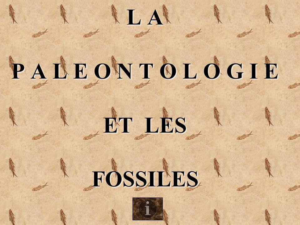 LE PLEISTOCENE (4) : 1,8 Millions dannées à 10 000 ans Megatherium (Argentine) Paresseux géant Megaloceros (Cerf géant des tourbières)
