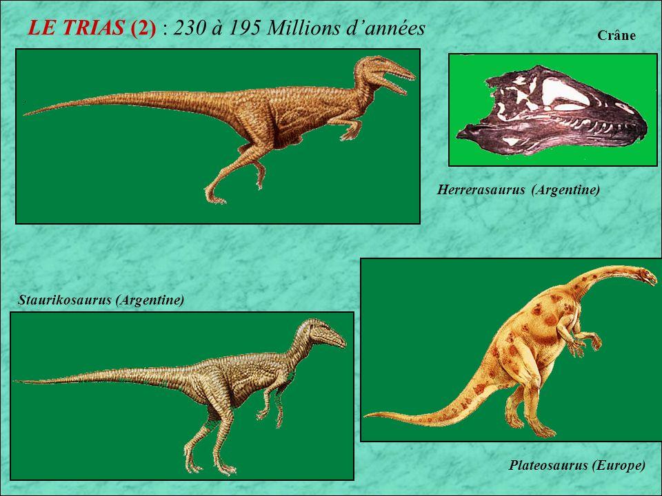 LE TRIAS : 230 à 195 Millions dannées Position des continents au Trias Massospondylus Le Trias est la première période de lERE SECONDAIRE Apparition des : 1er Dinosaures Ammonites