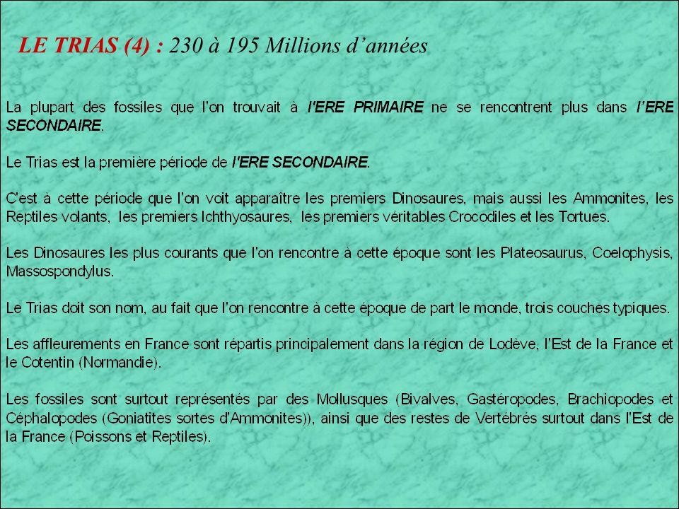 LE TRIAS (3) : 230 à 195 Millions dannées Paysage lacustre du Trias Européen Proganochelys (Tortue) et Hybodus (Requin deau douce)