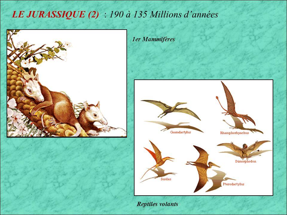 Origine des Oiseaux Cliquer sur le carré noir ci-dessous pour en savoir plus