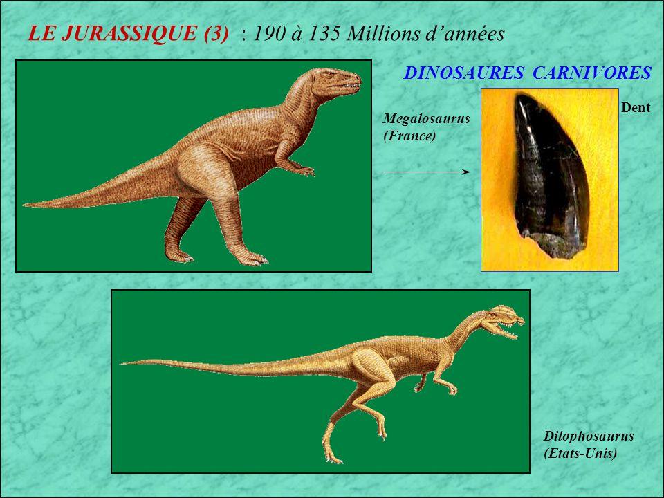 LE JURASSIQUE (2) : 190 à 135 Millions dannées 1er Mammifères Reptiles volants