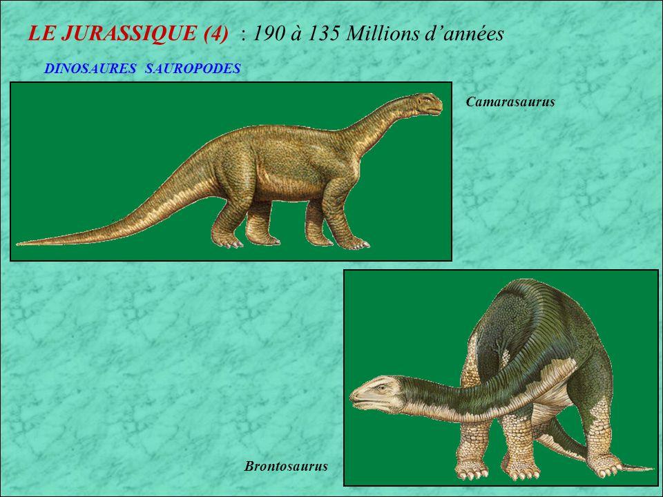 LE JURASSIQUE (3) : 190 à 135 Millions dannées Megalosaurus (France) Dilophosaurus (Etats-Unis) DINOSAURES CARNIVORES Dent