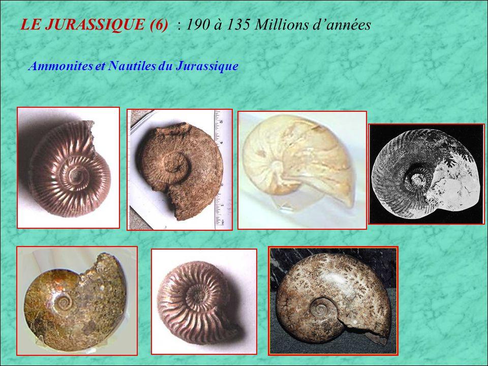 LE JURASSIQUE (5) : 190 à 135 Millions dannées Scelidosaurus Heterodontosaurus Stegosaurus