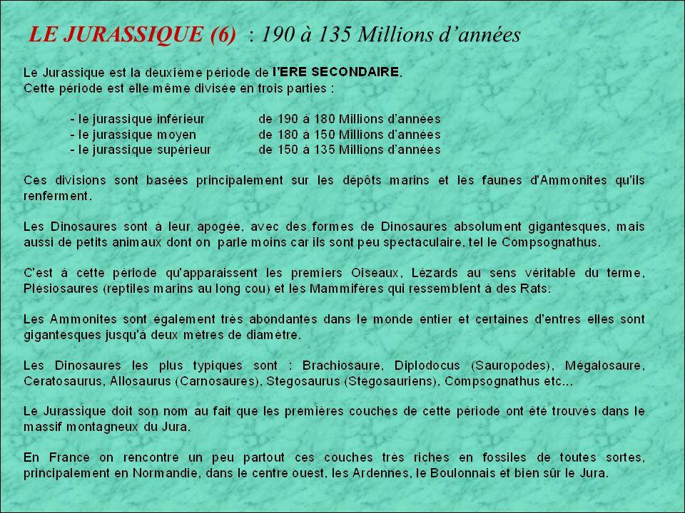 LE JURASSIQUE (6) : 190 à 135 Millions dannées Ammonites et Nautiles du Jurassique