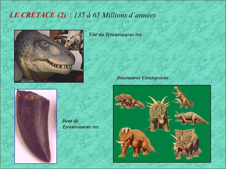 LE CRETACE : 135 à 65 Millions dannées Famille de Protoceratops (Mongolie) Apparition des premières plantes à fleur, important dépôt de Craie dou le nom de cette période (Craie = Crétacé) A la fin de cette période disparition des Dinosaures, des Reptiles marins et volants Position des continents au Crétacé