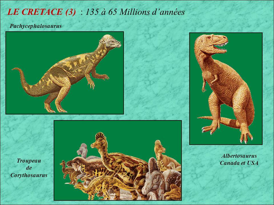LE CRETACE (2) : 135 à 65 Millions dannées Tête du Tyranosaurus rex Dinosaures Ceratopsiens Dent de Tyranosaurus rex
