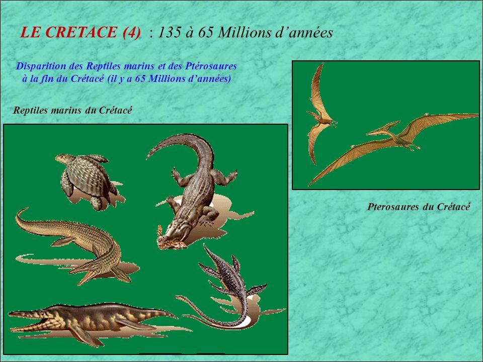 LE CRETACE (3) : 135 à 65 Millions dannées Pachycephalosaurus Albertosaurus Canada et USA Troupeau de Corythosaurus
