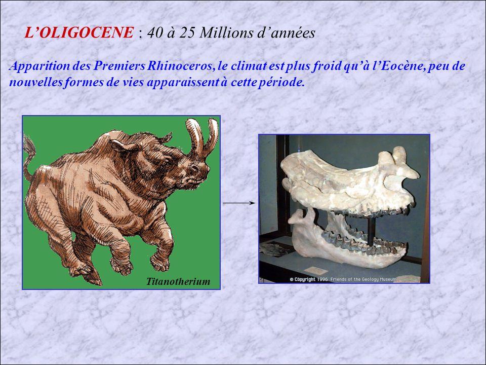 LEOCENE (3) : 55 à 40 Millions dannées
