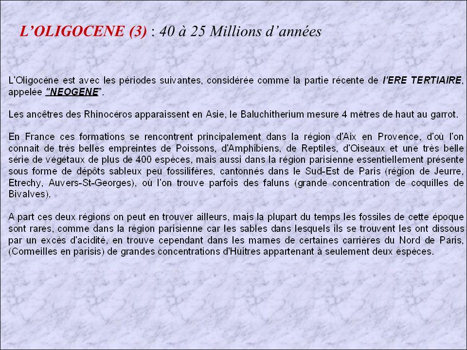 LOLIGOCENE (2) : 40 à 25 Millions dannées INSECTES et VEGETAUX TROUVES DANS LAMBRE DE LA BALTIQUE LAMBRE EST UNE RESINE FOSSILE ISSUE DARBRES RESINEUX (PINS et SAPINS)