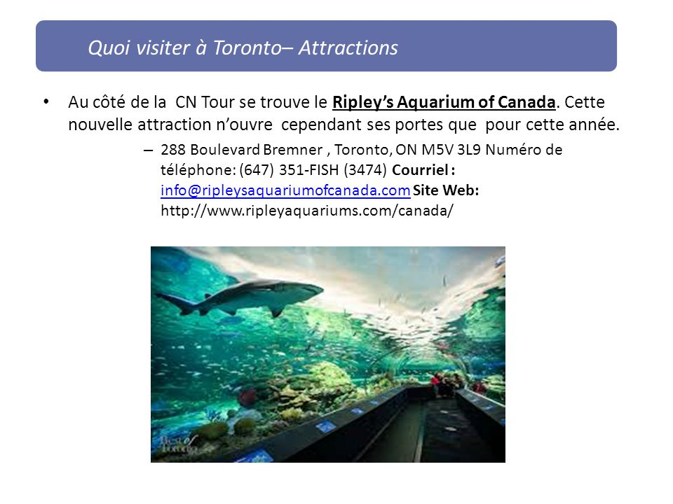 Au côté de la CN Tour se trouve le Ripleys Aquarium of Canada.