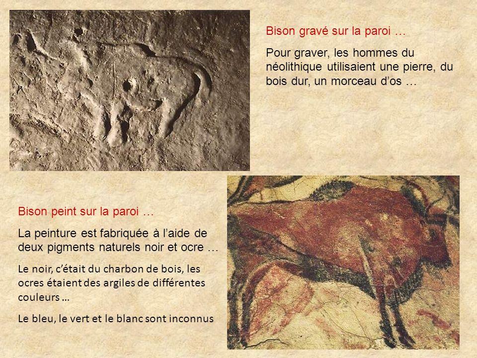 Bison gravé sur la paroi … Pour graver, les hommes du néolithique utilisaient une pierre, du bois dur, un morceau dos … Bison peint sur la paroi … La