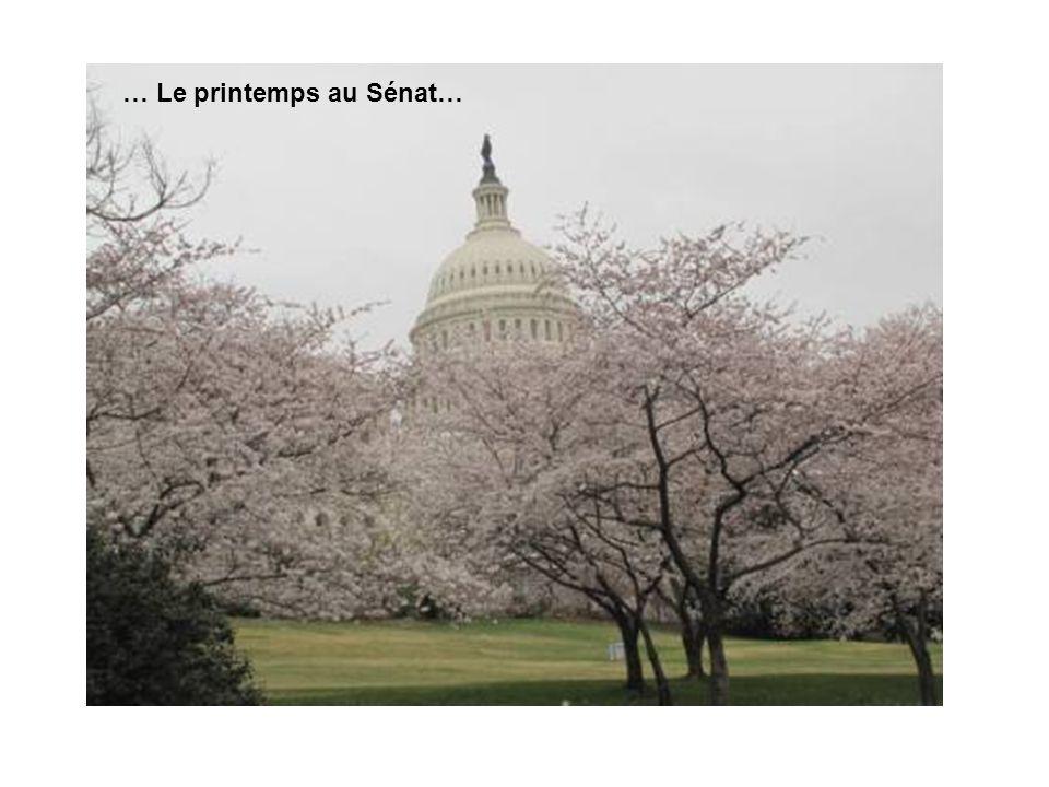 … Le printemps au Sénat…