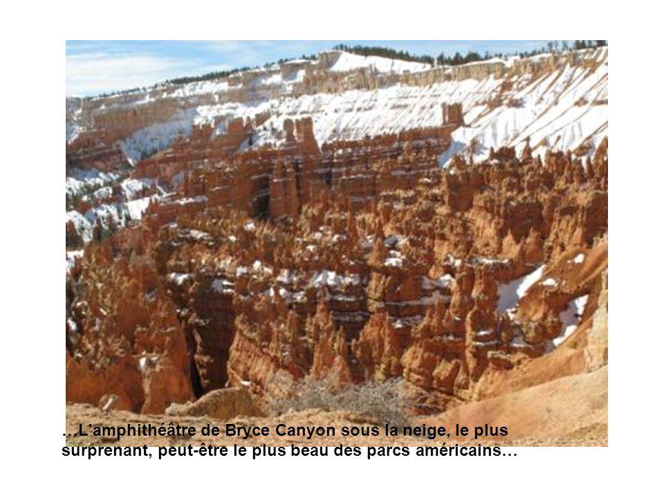 …Lamphithéâtre de Bryce Canyon sous la neige, le plus surprenant, peut-être le plus beau des parcs américains…