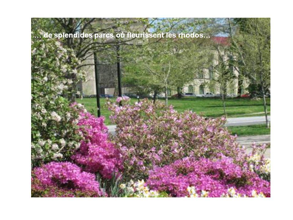 … de splendides parcs où fleurissent les rhodos…